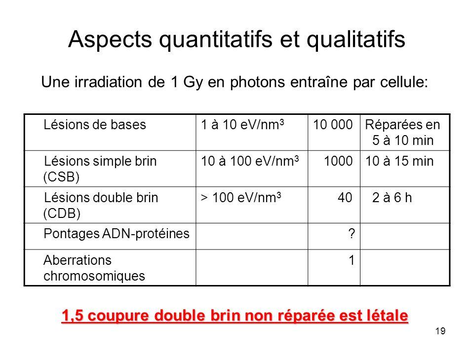 19 Aspects quantitatifs et qualitatifs Une irradiation de 1 Gy en photons entraîne par cellule: Lésions de bases1 à 10 eV/nm 3 10 000Réparées en 5 à 10 min Lésions simple brin (CSB) 10 à 100 eV/nm 3 100010 à 15 min Lésions double brin (CDB) > 100 eV/nm 3 40 2 à 6 h Pontages ADN-protéines.