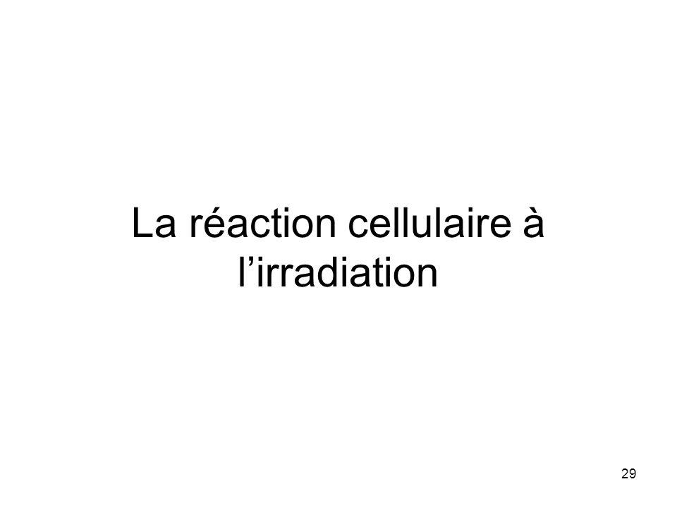 29 La réaction cellulaire à lirradiation
