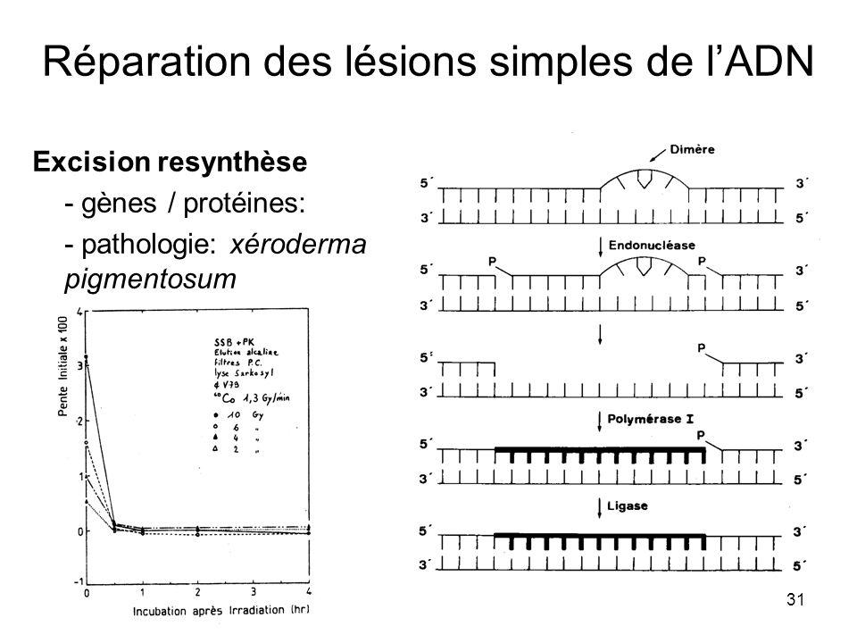31 Réparation des lésions simples de lADN Excision resynthèse - gènes / protéines: - pathologie: xéroderma pigmentosum