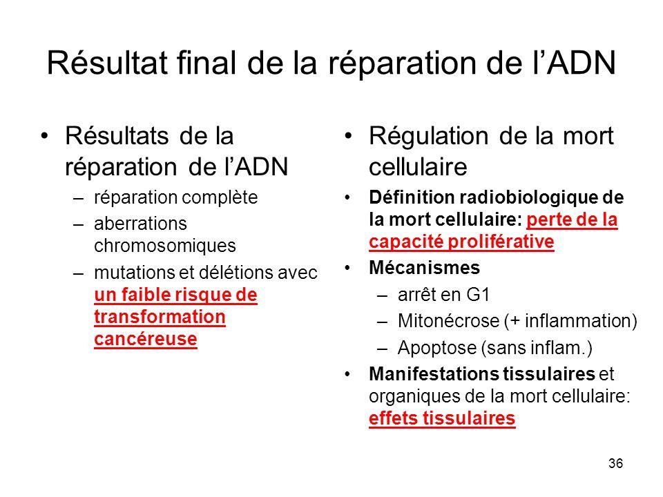 36 Résultat final de la réparation de lADN Résultats de la réparation de lADN –réparation complète –aberrations chromosomiques –mutations et délétions avec un faible risque de transformation cancéreuse Régulation de la mort cellulaire Définition radiobiologique de la mort cellulaire: perte de la capacité proliférative Mécanismes –arrêt en G1 –Mitonécrose (+ inflammation) –Apoptose (sans inflam.) Manifestations tissulaires et organiques de la mort cellulaire: effets tissulaires