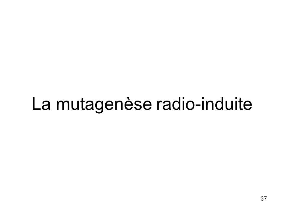 37 La mutagenèse radio-induite