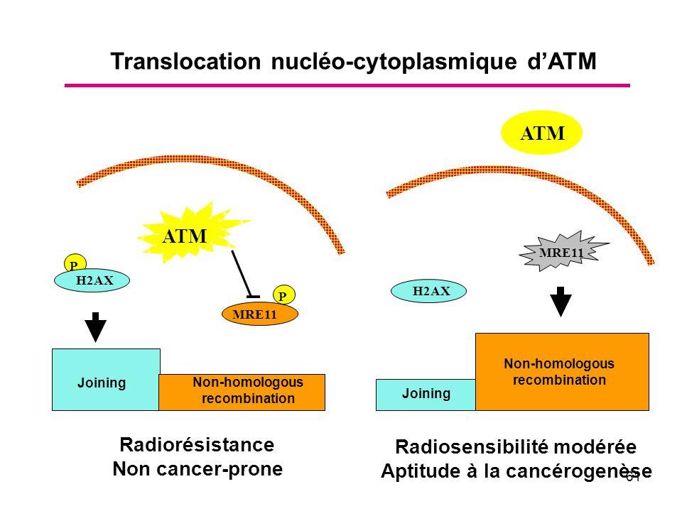 61 P Non-homologous recombination MRE11 ATM P MRE11 H2AX Radiorésistance Non cancer-prone H2AX Radiosensibilité modérée Aptitude à la cancérogenèse Joining Non-homologous recombination Translocation nucléo-cytoplasmique dATM