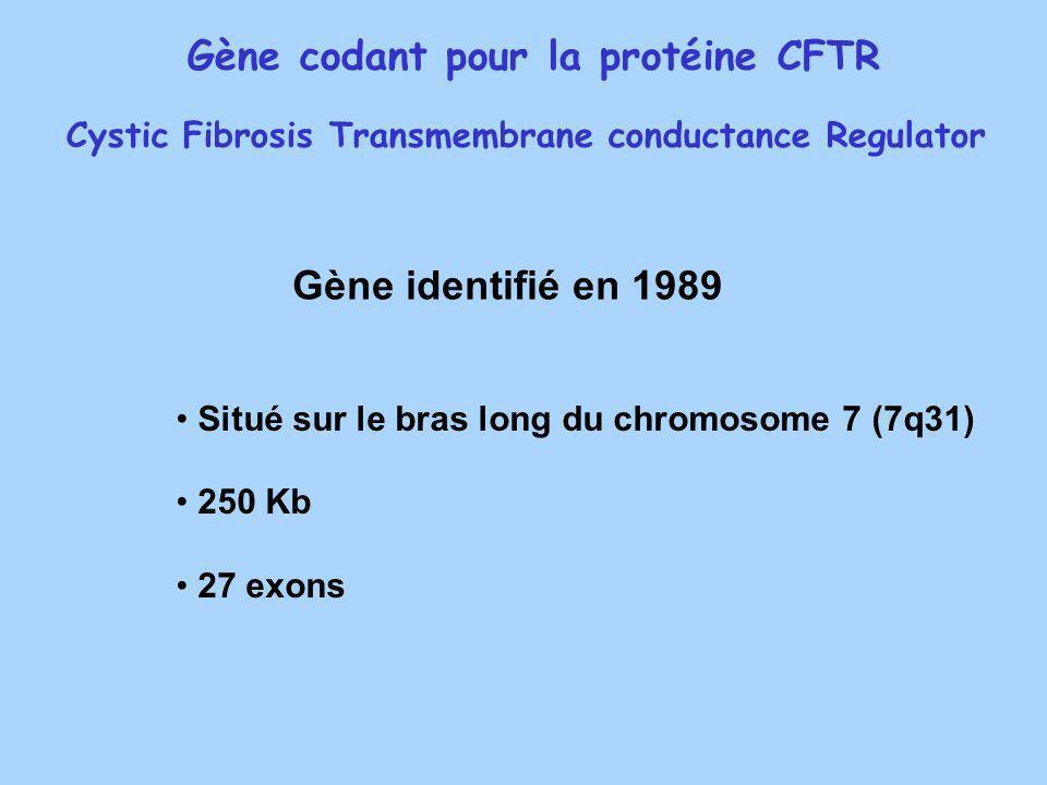 Gène codant pour la protéine CFTR Cystic Fibrosis Transmembrane conductance Regulator Situé sur le bras long du chromosome 7 (7q31) 250 Kb 27 exons Gè