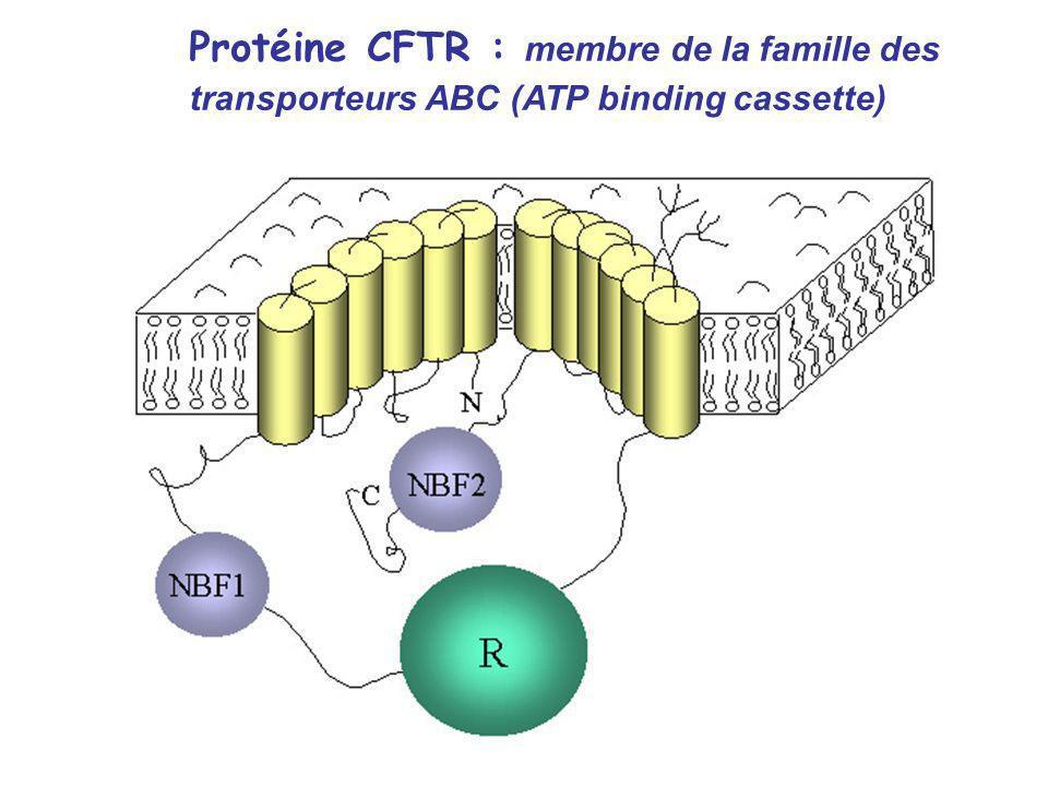 Protéine CFTR : membre de la famille des transporteurs ABC (ATP binding cassette)