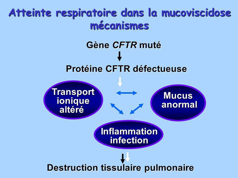 Gène CFTR muté Protéine CFTR défectueuse Destruction tissulaire pulmonaire Atteinte respiratoire dans la mucoviscidose mécanismes Transportioniquealté