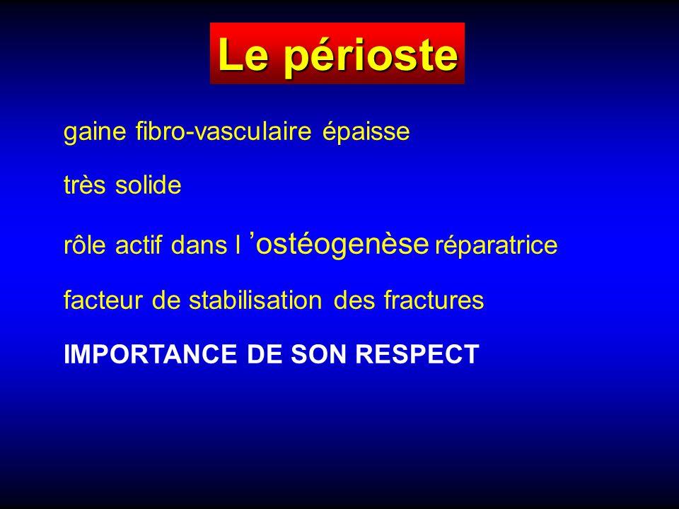 gaine fibro-vasculaire épaisse très solide rôle actif dans l ostéogenèse réparatrice facteur de stabilisation des fractures IMPORTANCE DE SON RESPECT Le périoste