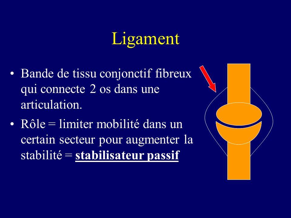 Ligament Bande de tissu conjonctif fibreux qui connecte 2 os dans une articulation. Rôle = limiter mobilité dans un certain secteur pour augmenter la