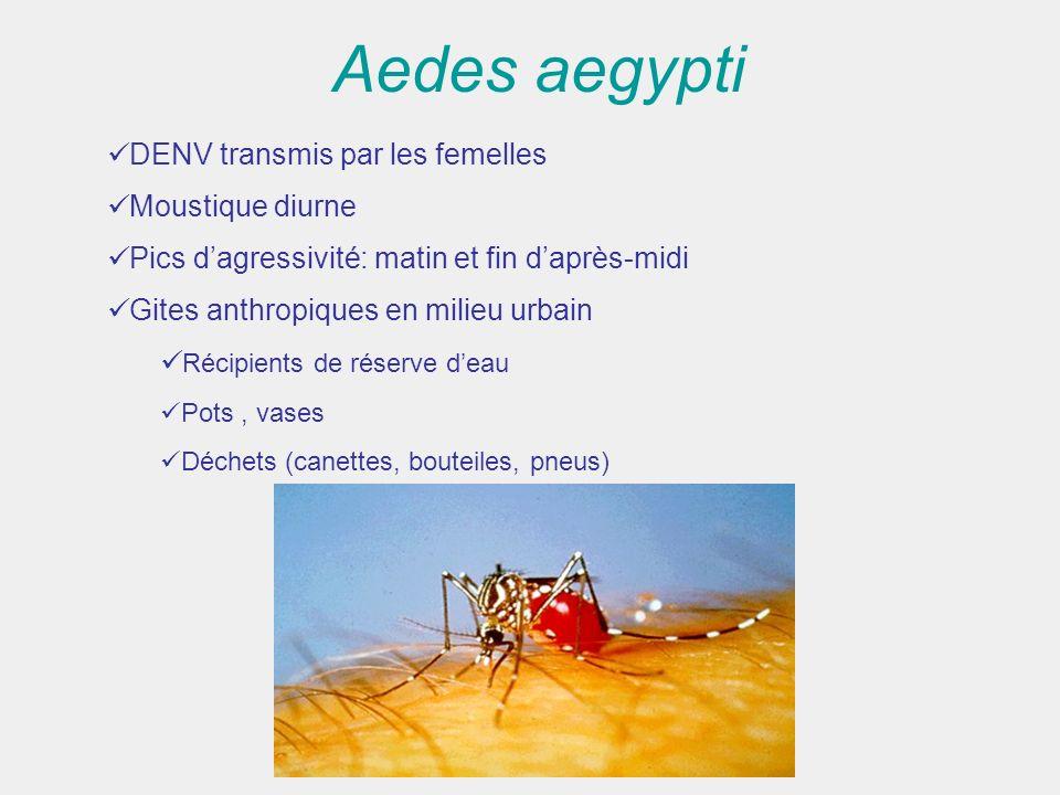 Aedes aegypti DENV transmis par les femelles Moustique diurne Pics dagressivité: matin et fin daprès-midi Gites anthropiques en milieu urbain Récipien