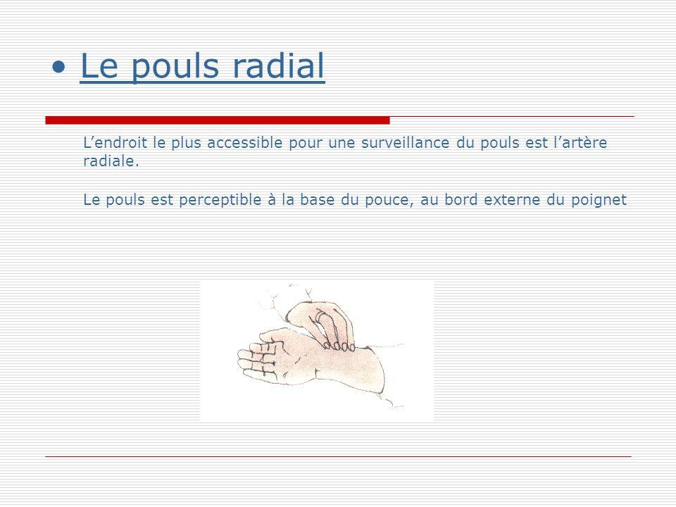 Le pouls radial Lendroit le plus accessible pour une surveillance du pouls est lartère radiale.