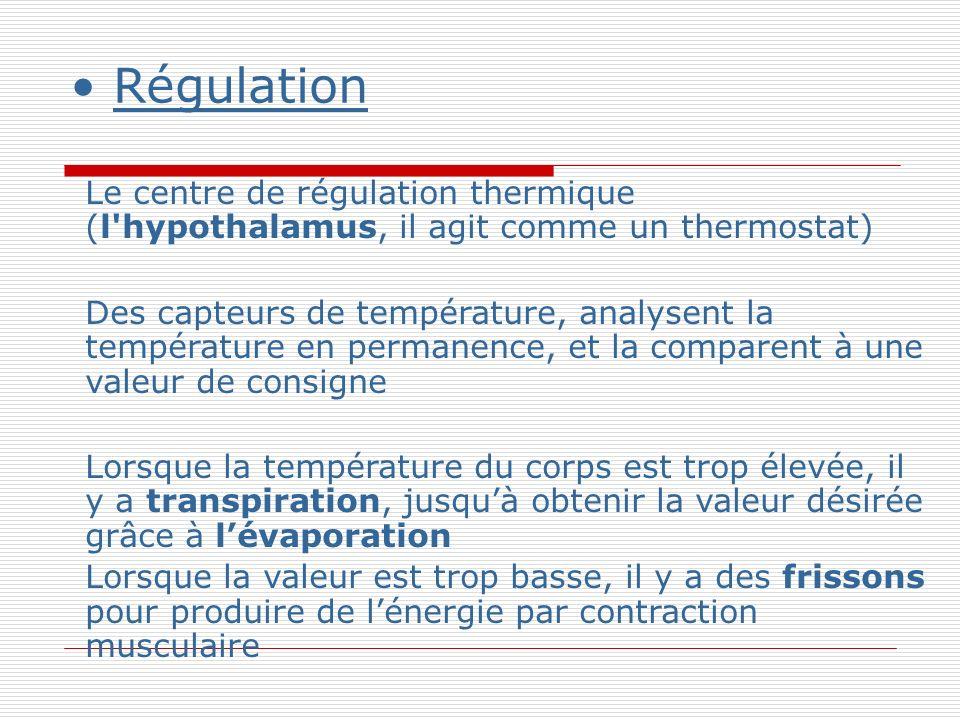 Régulation Le centre de régulation thermique (l hypothalamus, il agit comme un thermostat) Des capteurs de température, analysent la température en permanence, et la comparent à une valeur de consigne Lorsque la température du corps est trop élevée, il y a transpiration, jusquà obtenir la valeur désirée grâce à lévaporation Lorsque la valeur est trop basse, il y a des frissons pour produire de lénergie par contraction musculaire