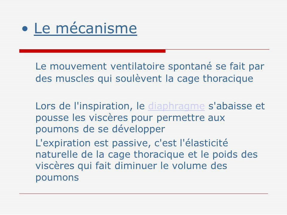 Le mécanisme Le mouvement ventilatoire spontané se fait par des muscles qui soulèvent la cage thoracique Lors de l inspiration, le diaphragme s abaisse et pousse les viscères pour permettre aux poumons de se développerdiaphragme L expiration est passive, c est l élasticité naturelle de la cage thoracique et le poids des viscères qui fait diminuer le volume des poumons