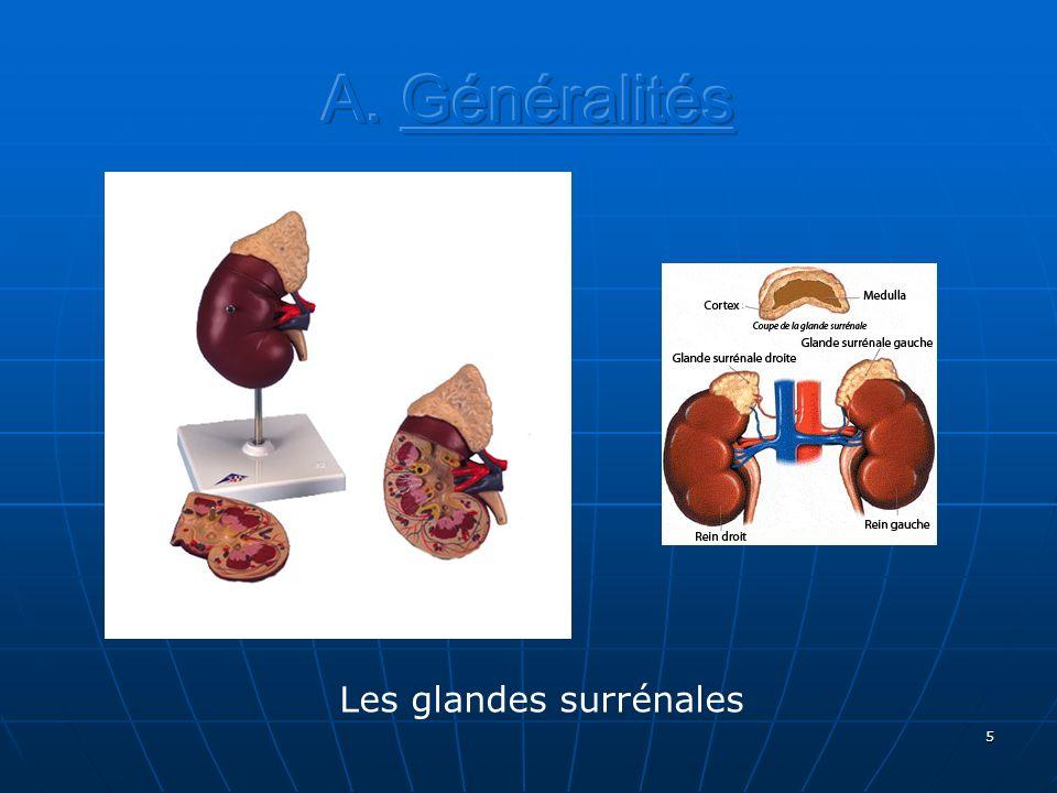 6 Les hormones des corticosurrénales : Les minéralocorticoïdes (Aldostérone)Les minéralocorticoïdes (Aldostérone) augmentent les taux sanguins de Na + et deau et réduisent le taux sanguin de potassium Les glucocorticoïdes (Cortisol) contribuent à la régulation du métabolisme, à la résistance au stress et à la diminution de la réaction inflammatoire.Les glucocorticoïdes (Cortisol) contribuent à la régulation du métabolisme, à la résistance au stress et à la diminution de la réaction inflammatoire.