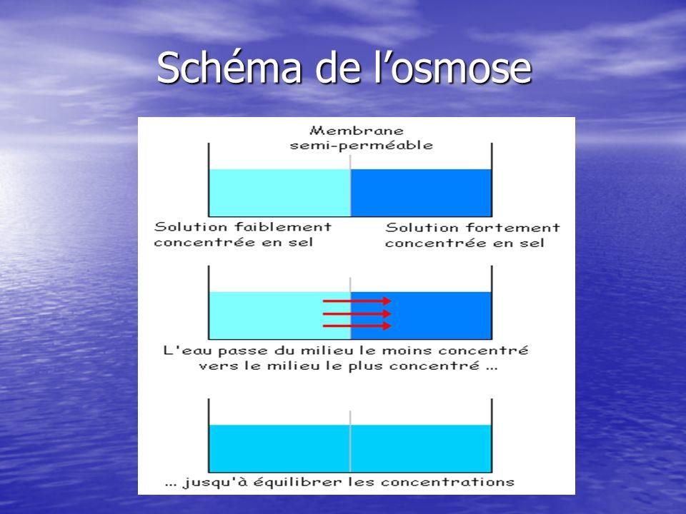 Phénomène dosmose dans une cellule Dans le contexte d une cellule, le milieu intracellulaire et extracellulaire sont séparés par une membrane plasmique, qui est semi-perméable.