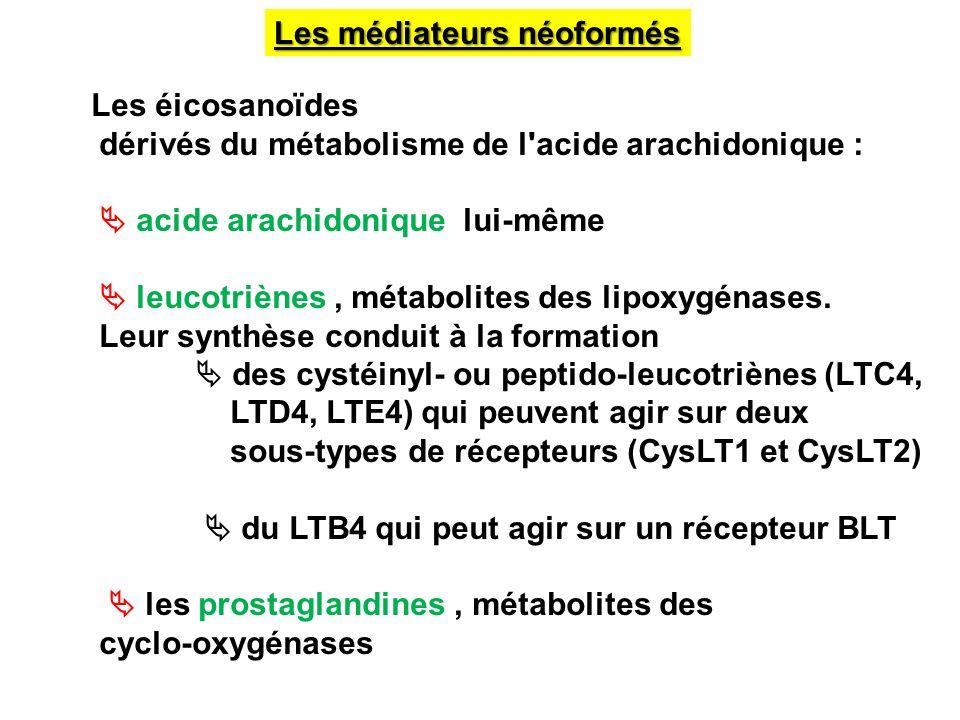 Les médiateurs néoformés Les éicosanoïdes dérivés du métabolisme de l'acide arachidonique : acide arachidonique lui-même leucotriènes, métabolites des