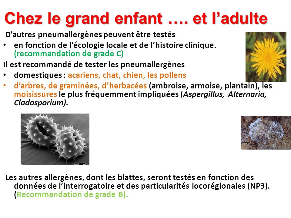 Chez le grand enfant …. et ladulte Dautres pneumallergènes peuvent être testés en fonction de lécologie locale et de lhistoire clinique. (recommandati