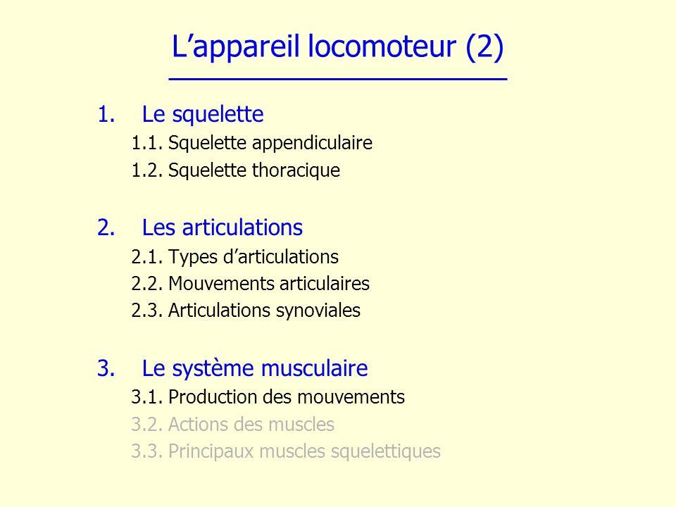 Lappareil locomoteur (2) 1.Le squelette 1.1. Squelette appendiculaire 1.2. Squelette thoracique 2.Les articulations 2.1. Types darticulations 2.2. Mou
