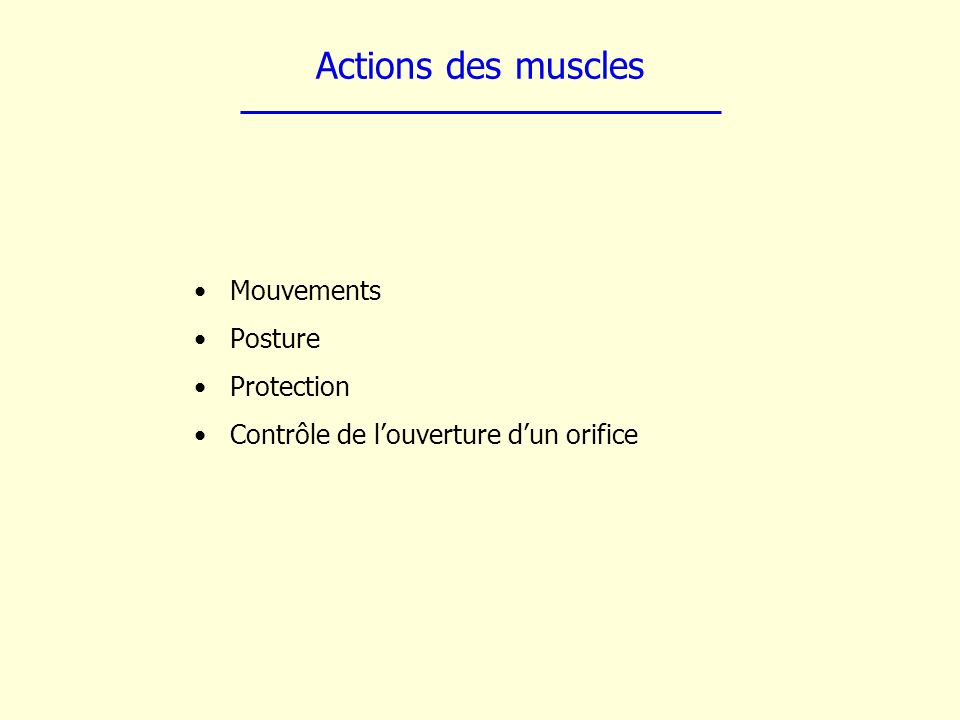 Actions des muscles Mouvements Posture Protection Contrôle de louverture dun orifice