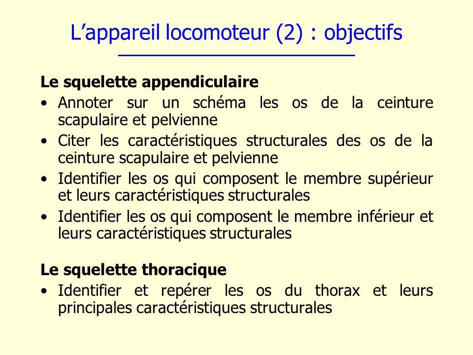 Lappareil locomoteur (2) : objectifs Le squelette appendiculaire Annoter sur un schéma les os de la ceinture scapulaire et pelvienne Citer les caracté