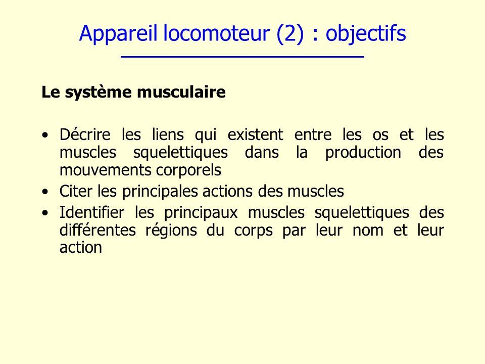 Appareil locomoteur (2) : objectifs Le système musculaire Décrire les liens qui existent entre les os et les muscles squelettiques dans la production