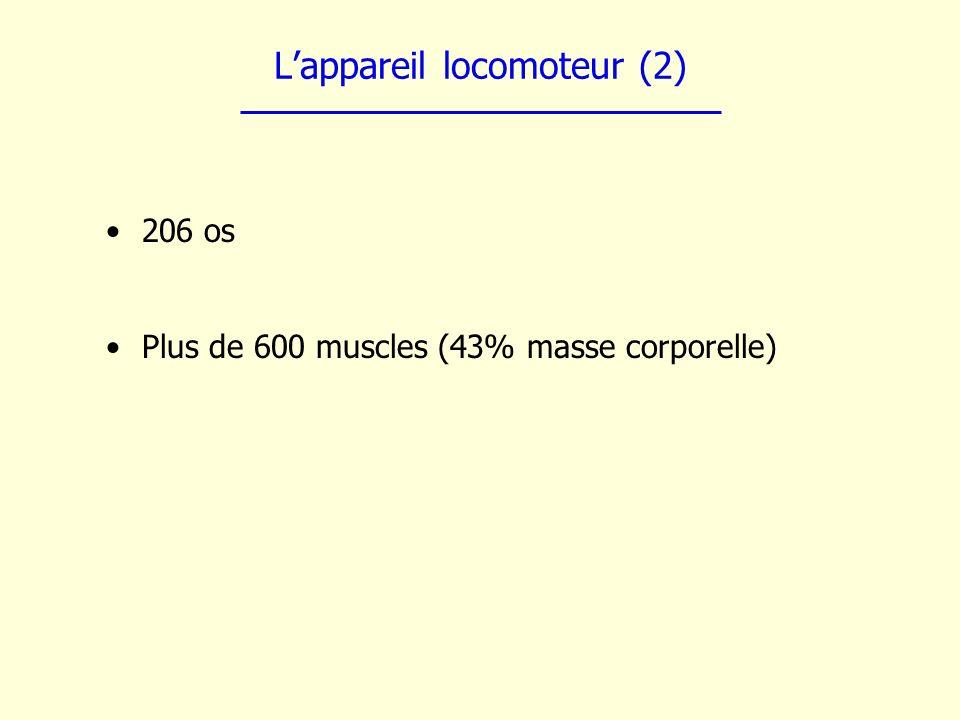 Lappareil locomoteur (2) 206 os Plus de 600 muscles (43% masse corporelle)
