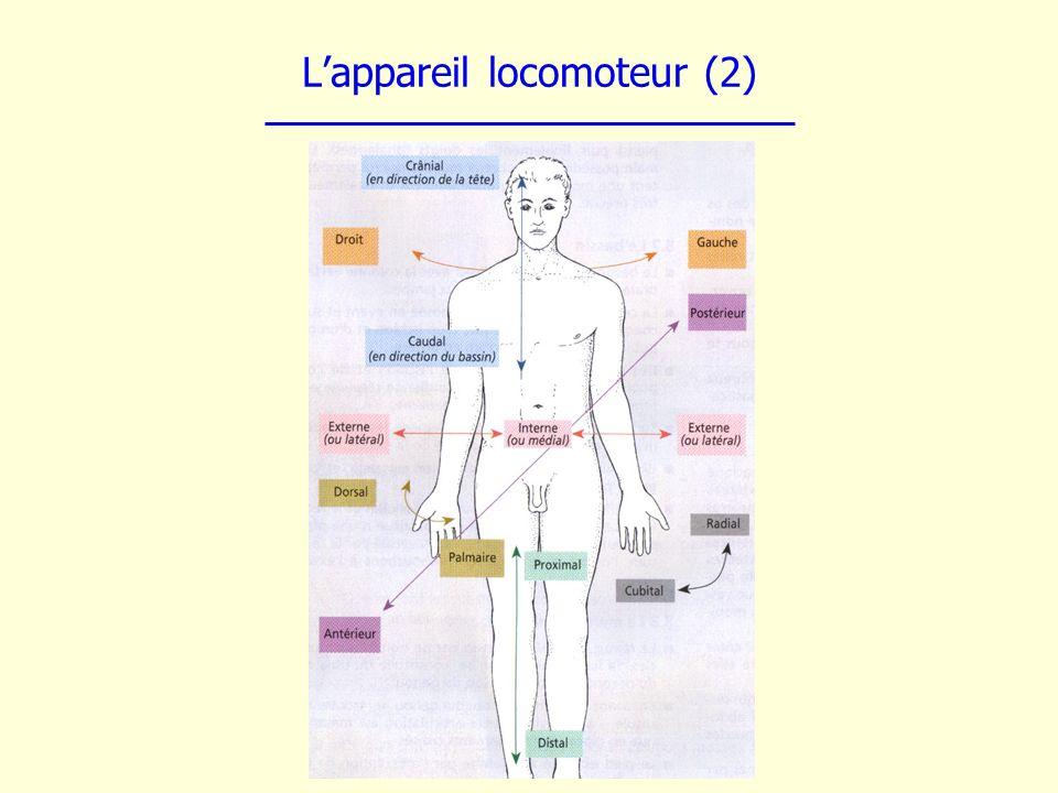 Lappareil locomoteur (2)