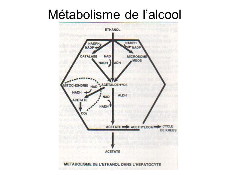 Métabolisme de lalcool