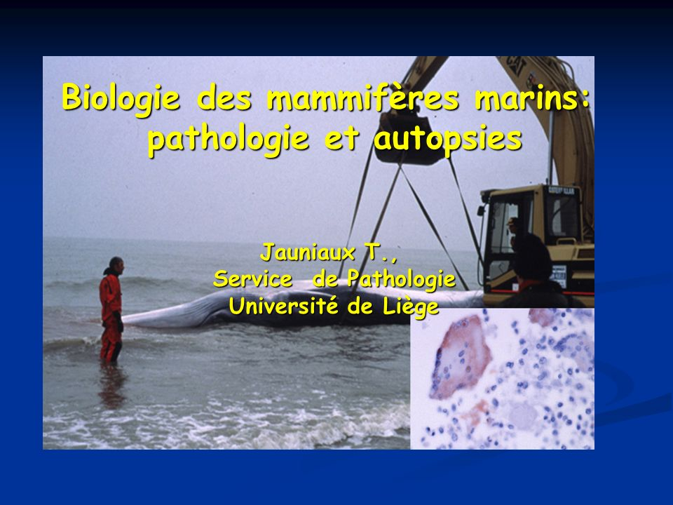 Buts - Détermination des causes de mortalité des mammifères marins morts à la côte belge et dans les régions avoisinantes; - Analyses des toxiques présents dans ces espèces; - Gestion des animaux vivants Moyens Financé par un programme fédéral associant: 4 biologistes 4 toxicologistes 4 pathologistes