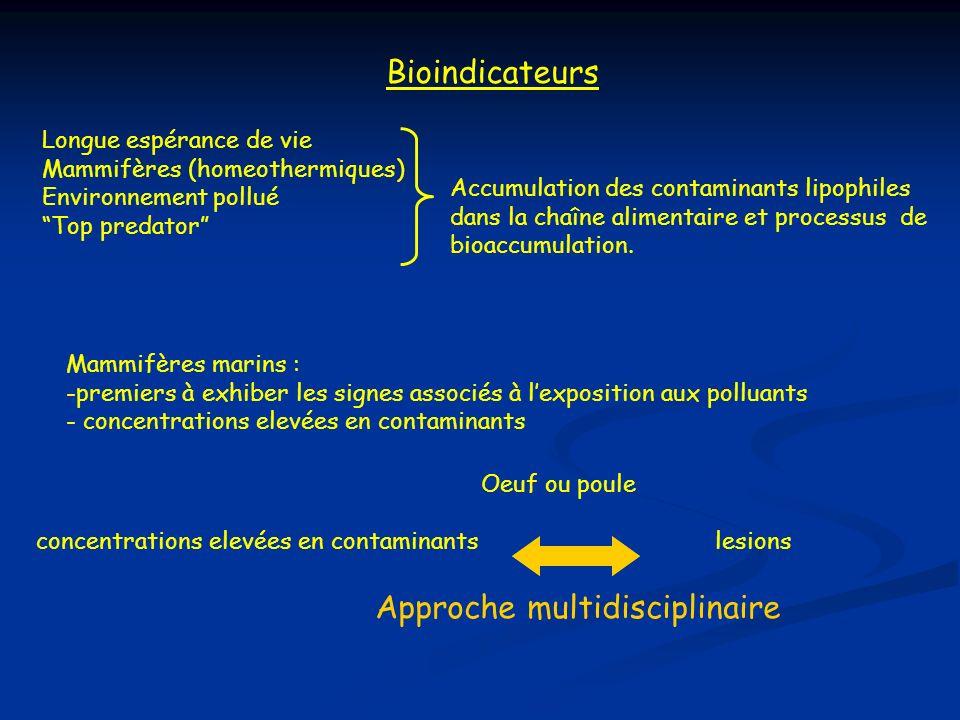 Bioindicateurs Longue espérance de vie Mammifères (homeothermiques) Environnement pollué Top predator Accumulation des contaminants lipophiles dans la