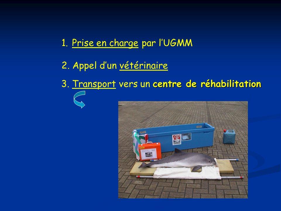 1.Prise en charge par lUGMM 2. Appel dun vétérinaire centre de réhabilitation 3. Transport vers un centre de réhabilitation Matériel adéquat