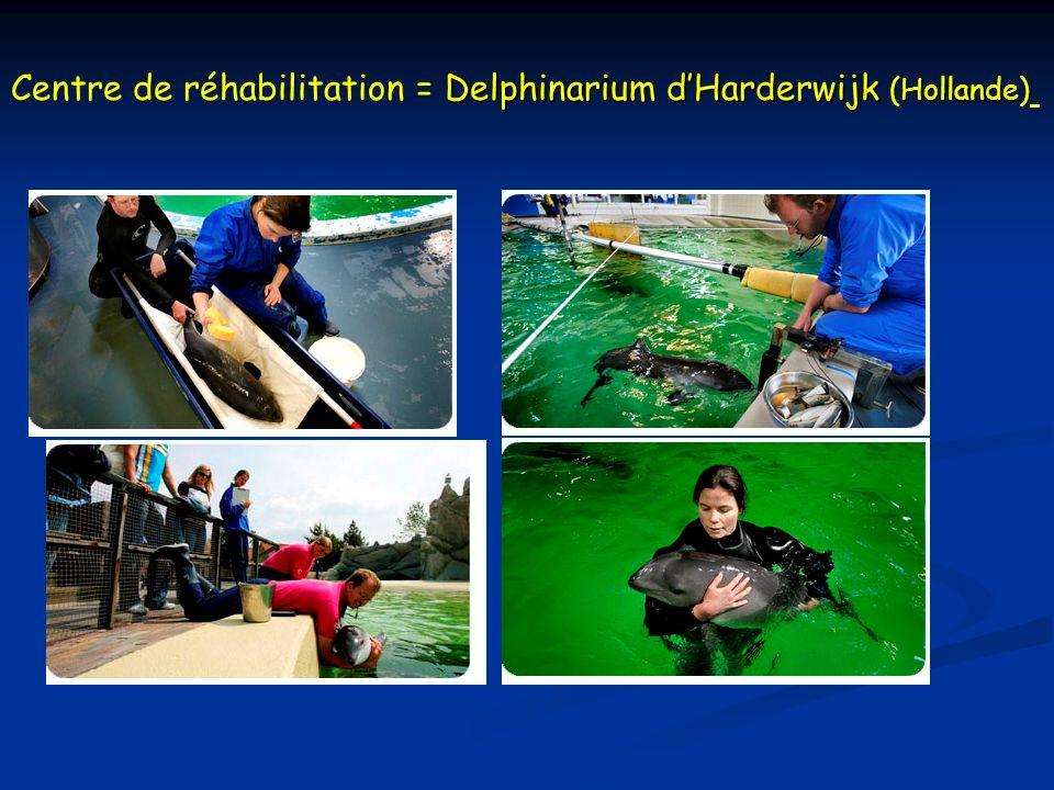 Delphinarium dHarderwijk (Hollande) Centre de réhabilitation = Delphinarium dHarderwijk (Hollande)