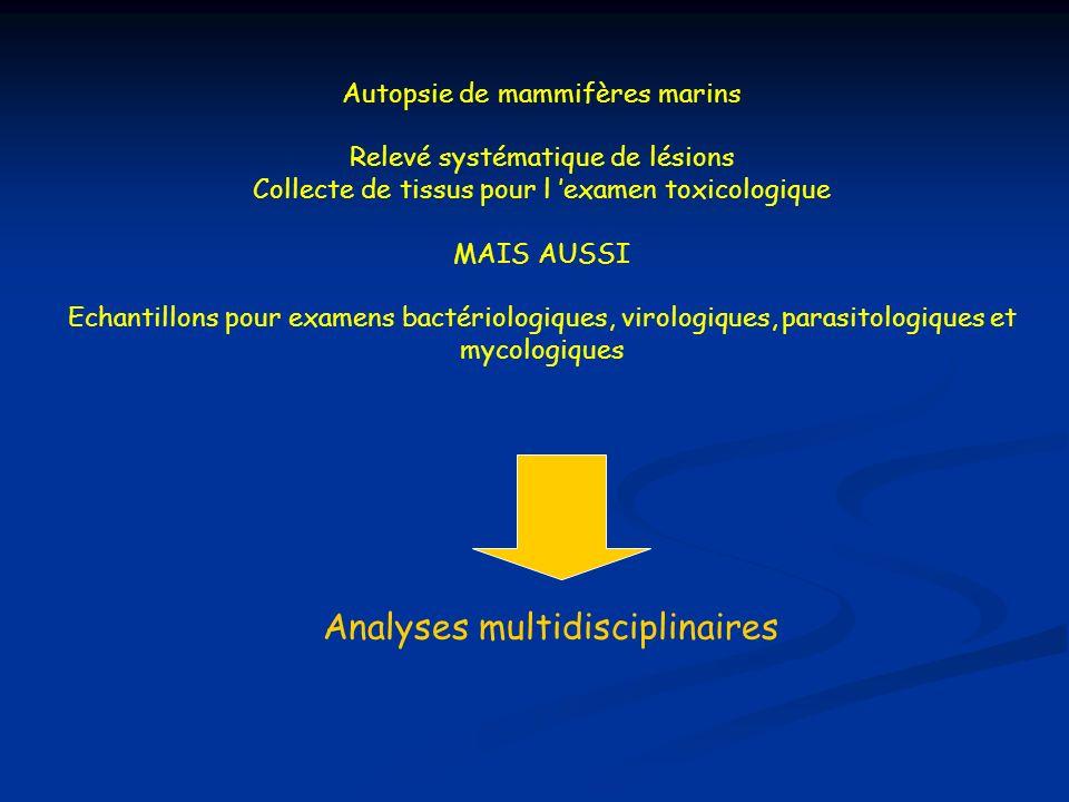 Autopsie de mammifères marins Relevé systématique de lésions Collecte de tissus pour l examen toxicologique MAIS AUSSI Echantillons pour examens bacté
