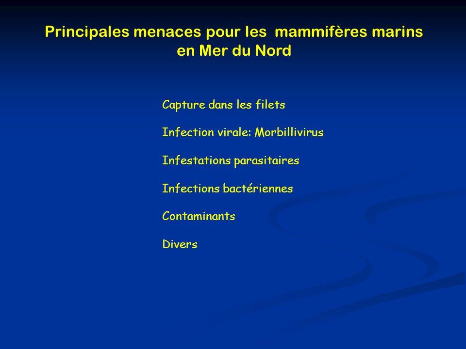 Principales menaces pour les mammifères marins en Mer du Nord Capture dans les filets Infection virale: Morbillivirus Infestations parasitaires Infect