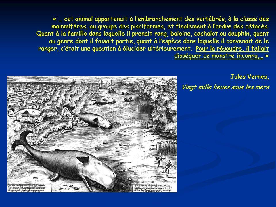« … cet animal appartenait à lembranchement des vertébrés, à la classe des mammifères, au groupe des pisciformes, et finalement à lordre des cétacés.