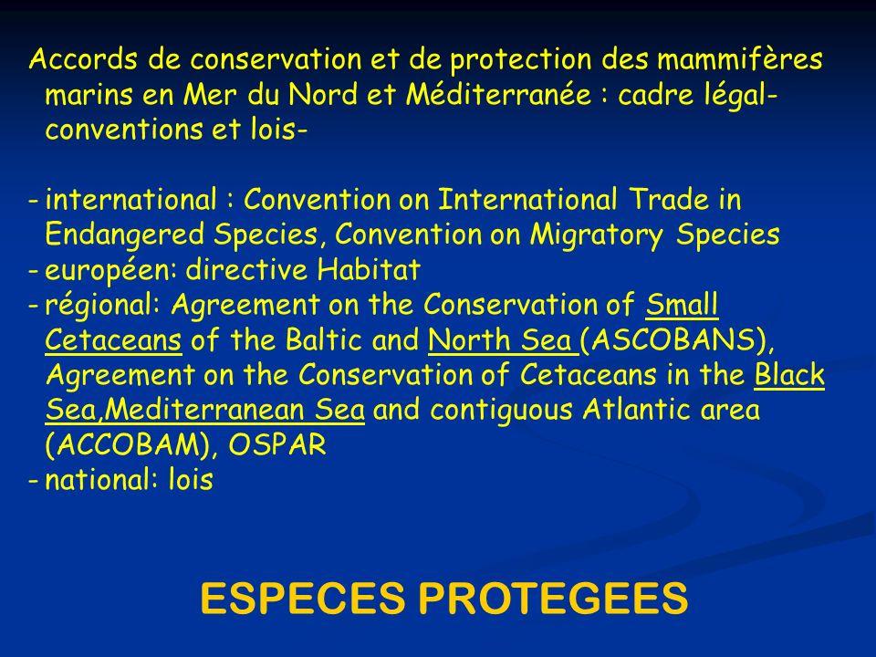 Pour la Belgique : ã Directive européenne Habitat (1992): cétacés ã Conférences Internationales de la Mer du Nord (La Haye, 1990; Esbjerg, 1995): cétacés et pinnipèdes ã ASCOBANS (1994): Agreement on the Conservation of Small Cetaceans of the Baltic and North Sea ã Arrêté Royal visant la protection des espèces menacées dans les espaces marins sous juridiction de la Belgique (14/02/02)
