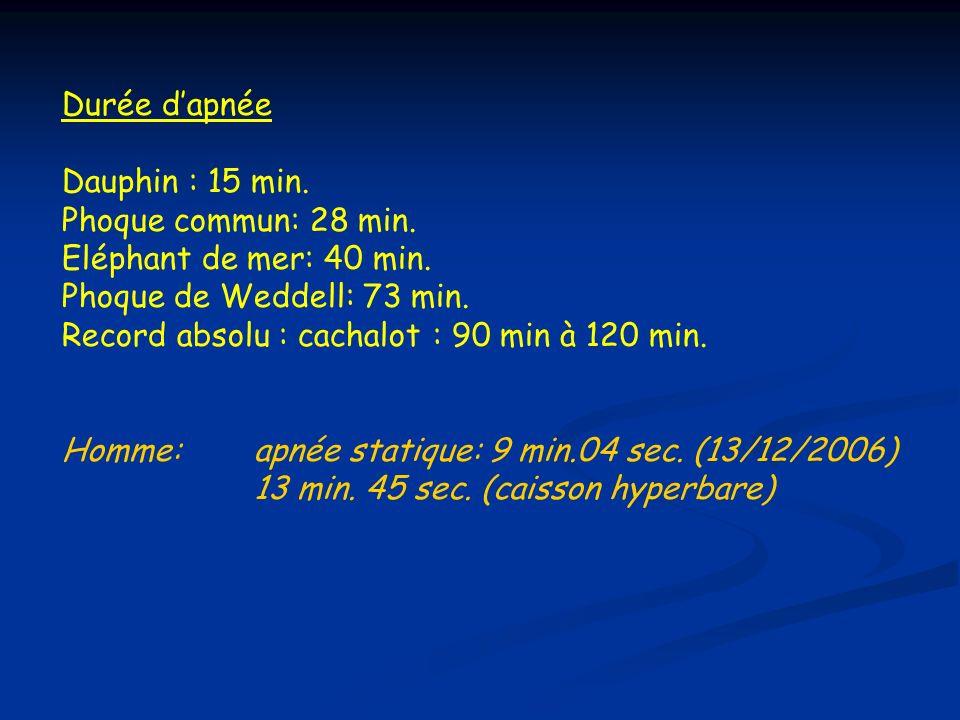 Profondeur: Dauphin : -100 et -200 m., max.: -600 m.
