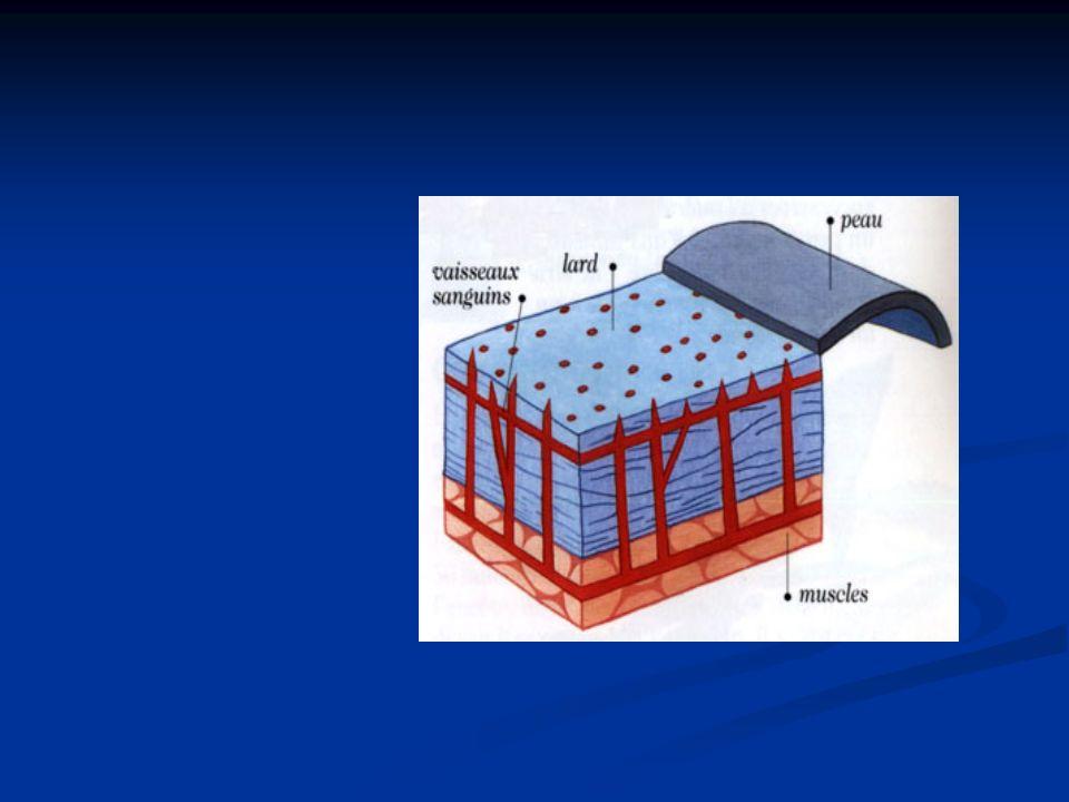 Augmentation de la conductibilité thermique 1.
