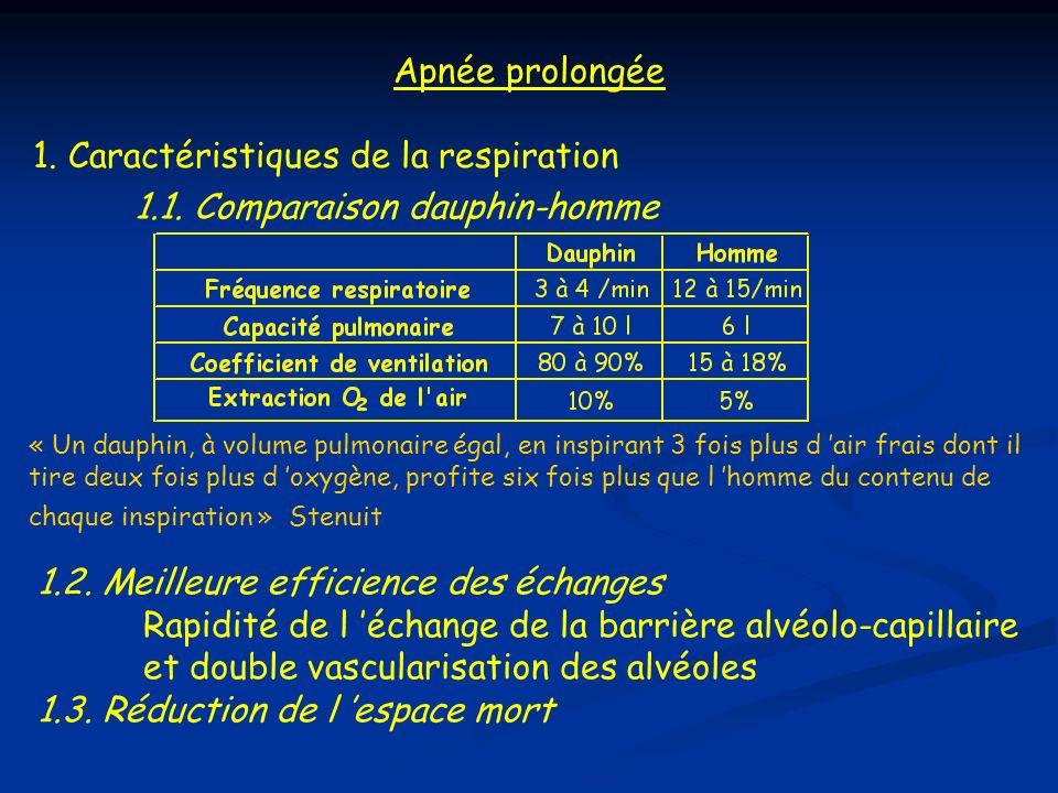 3. Disposition de la cage thoracique - Double incurvation des côtes = « accordéon » collapsus pulmonaire complet (-70 m) 4. rete mirabile à géométrie