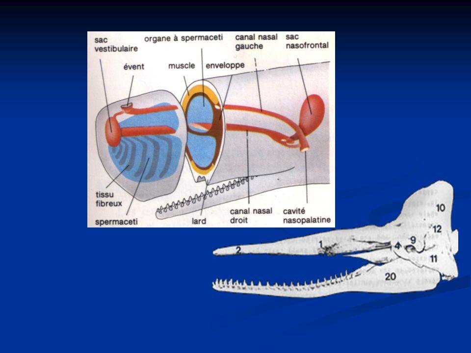 Profondeur maximale : 3000 m Apnée maximale : 2 h Vitesse de sonde : 150m/min Vitesse de remontée : 120m/min Champion de la plongée