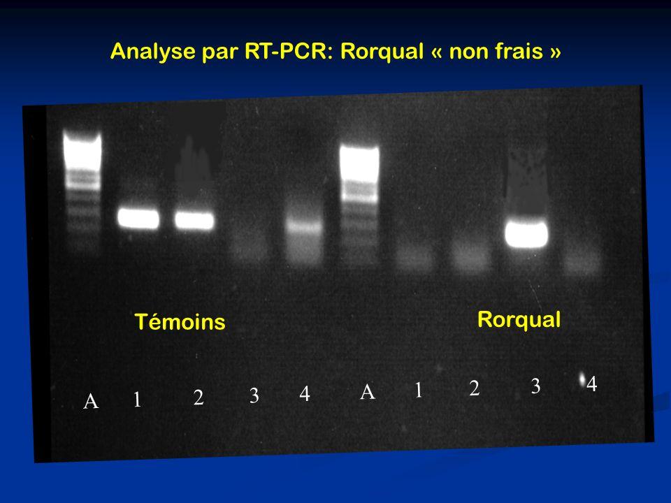 A 1 2 3 4 A 1 2 3 4 Analyse par RT-PCR: Rorqual « non frais » Témoins Rorqual