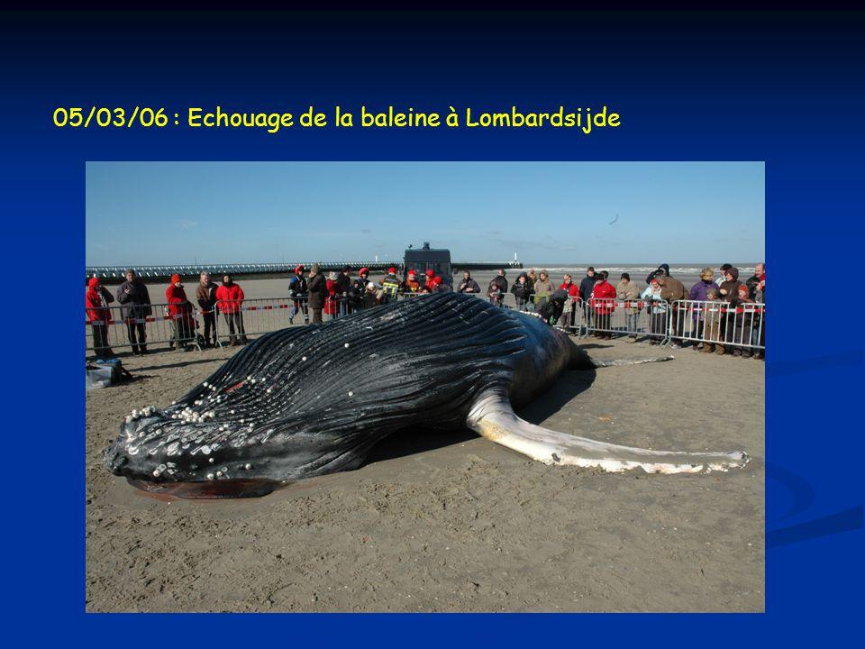 05/03/06 : Echouage de la baleine à Lombardsijde