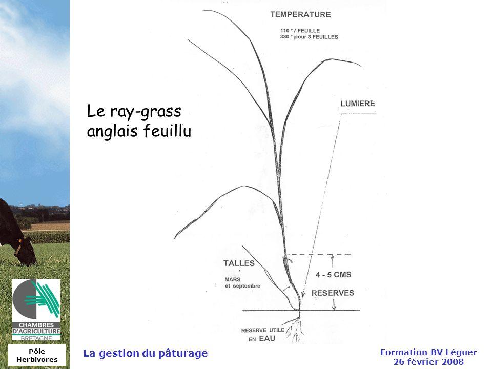 Pôle Herbivores Formation BV Léguer 26 février 2008 La gestion du pâturage Le ray-grass anglais feuillu
