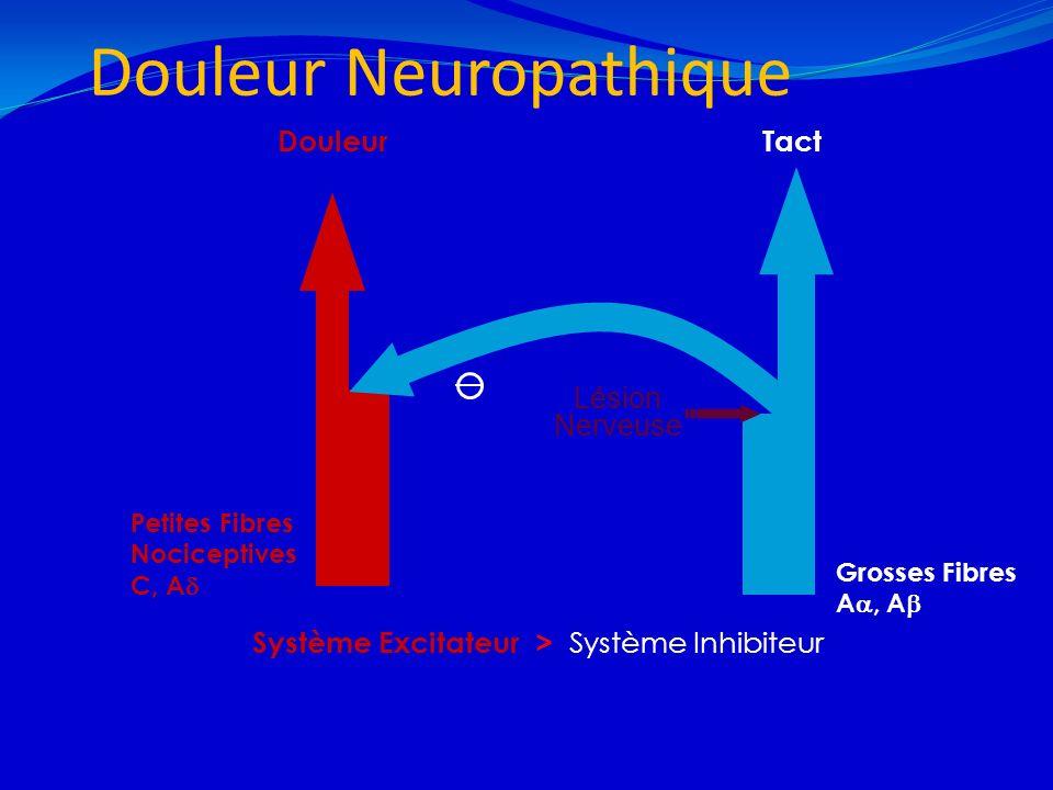 Douleur Neuropathique 21/02/201411 Grosses Fibres A, A Douleur Petites Fibres Nociceptives C, A Tact Système Excitateur > Système Inhibiteur Lésion Ne