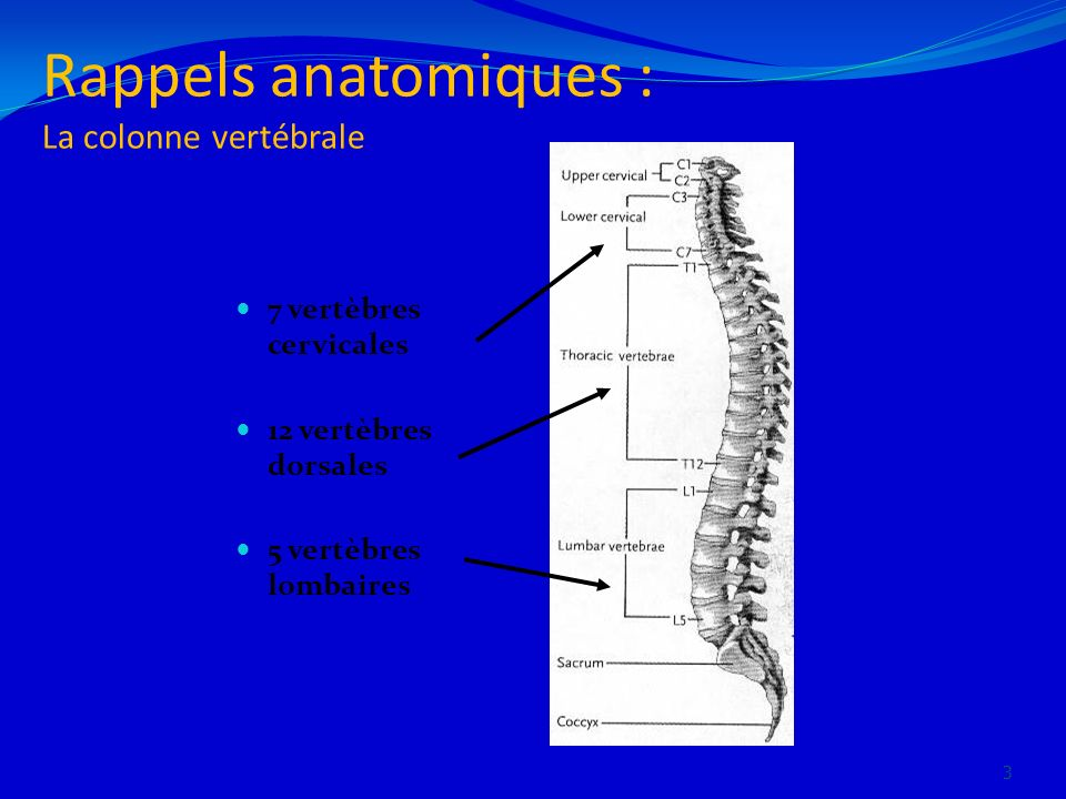 Rappels anatomiques : La colonne vertébrale 7 vertèbres cervicales 12 vertèbres dorsales 5 vertèbres lombaires 3