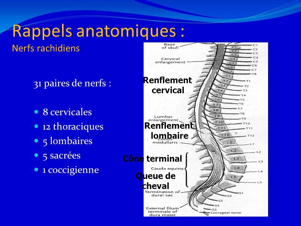 Rappels anatomiques Segments médullaires Autant de segments médullaires que de vertèbres Décalage dû à la croissance osseuse > croissance moelle Racine plus basse que segment médullaire 6 L2 C6
