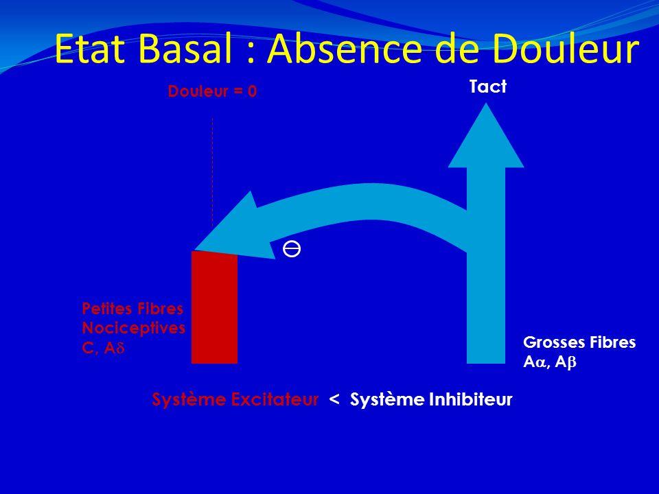 Etat Basal : Absence de Douleur 21/02/20149 Grosses Fibres A, A Douleur = 0 Petites Fibres Nociceptives C, A Tact Système Excitateur < Système Inhibit