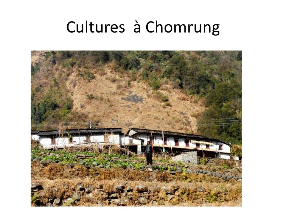 Cultures à Chomrung