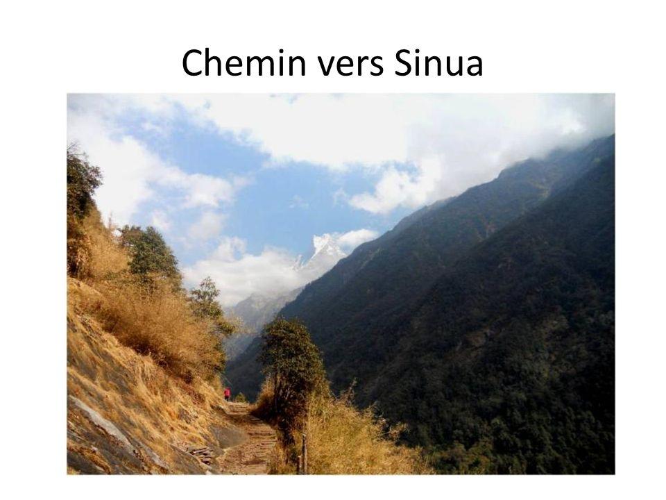Chemin vers Sinua