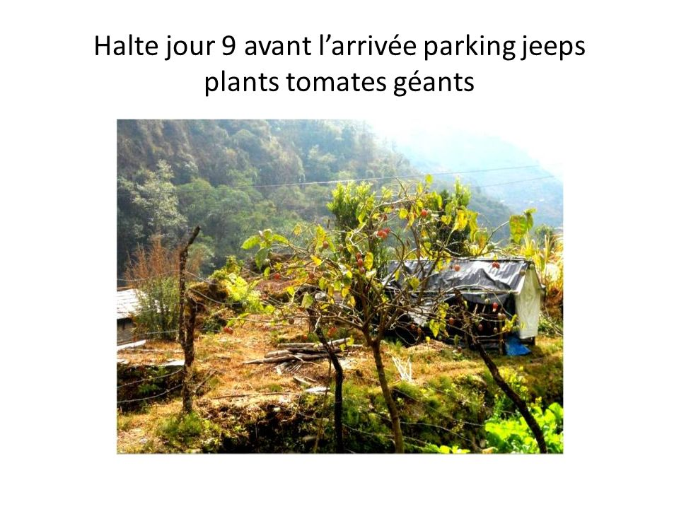 Halte jour 9 avant larrivée parking jeeps plants tomates géants