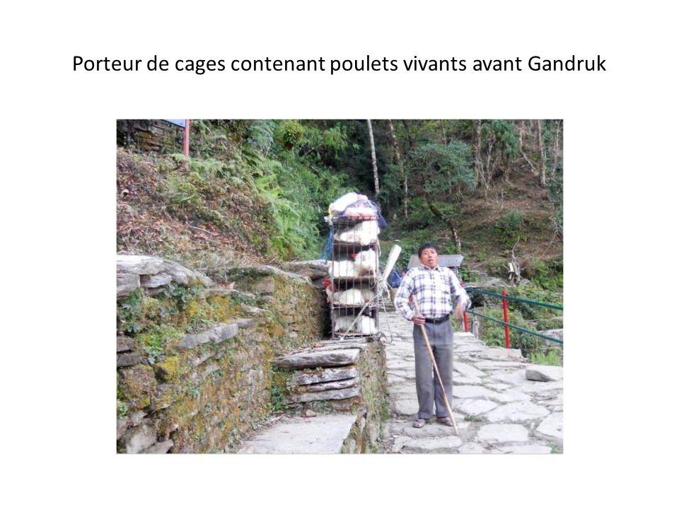 Porteur de cages contenant poulets vivants avant Gandruk