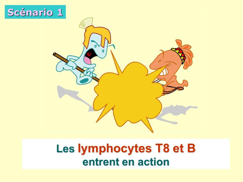 Les lymphocytes T8 et B entrent en action Scénario 1